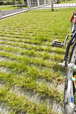 Graue Rasenplatten mit Rasenliner mit Gras in den Zwischenraeumen und Fahrrad und bunten Speichen und Edelstahlgelaender und