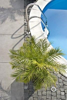 Gepflasterte Poolumrahmung Massimo light aus Terrassenplatten 100x100 aus Sichtbeton in dunkelgrau und Pool und Palme am Poolrand