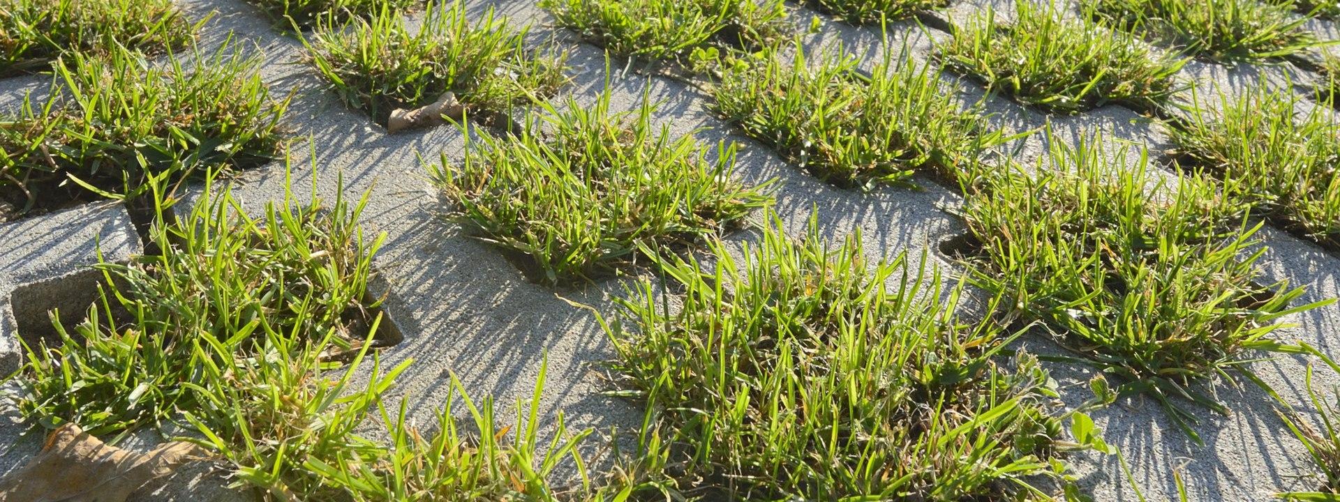 Rasengitter, Pflasterstein, Rasenkammerstein von GODELMANN - Bepflanzte Rasengitterplatte mit geraeumigen Rasenkammern in grau mit Gras und graue Betonstege udn Himmel und Sonnenschein
