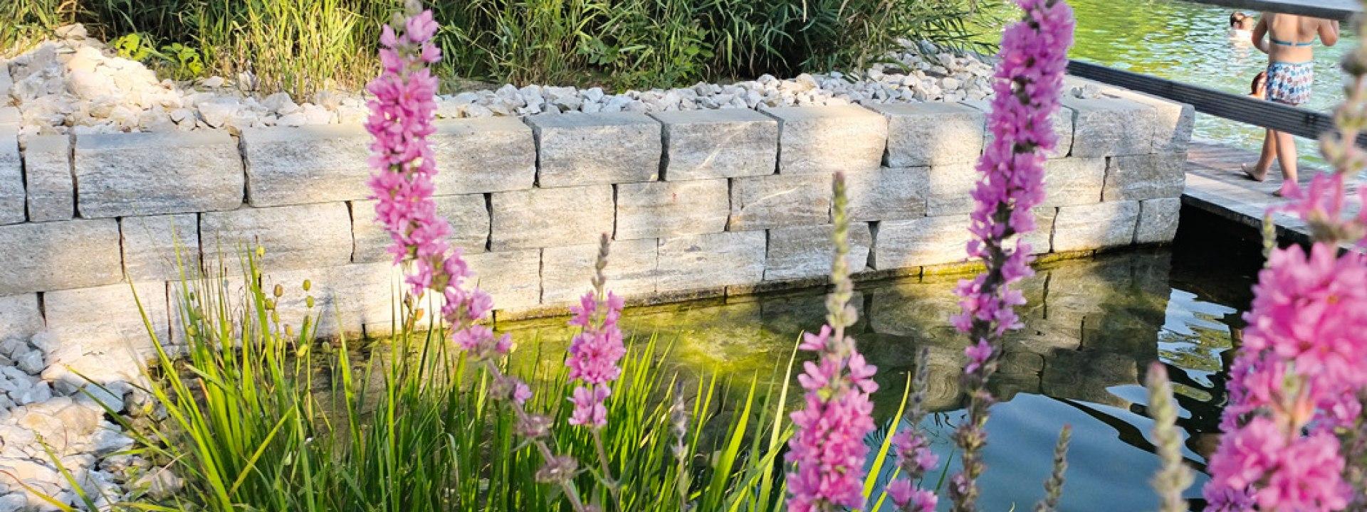Beige Steinwand mit Graesern und Blumen und Wasser