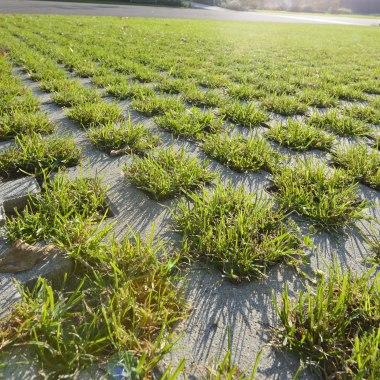 Bepflanzte Rasengitterplatte mit geraeumigen Rasenkammern in grau mit Gras und graue Betonstege udn Himmel und Sonnenschein